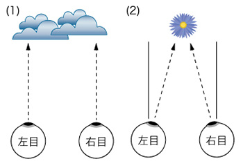 輻輳機能不良について 銀座 東京のメガネ店トリプル